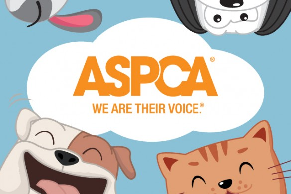 Download the ASPCA Package to Help Prevent Animal Cruelty