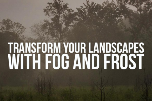 Transform Your Landscapes with Fog and Frost