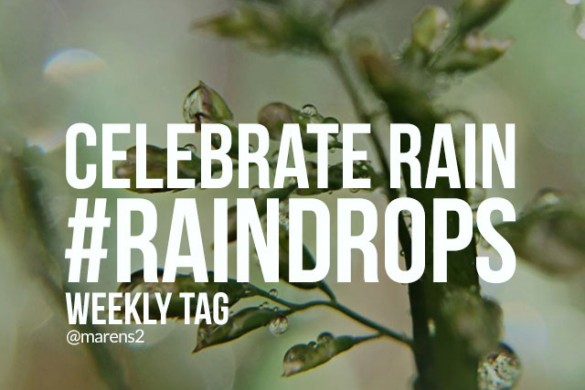 Celebrate Rain with the Weekly Tag #raindrops