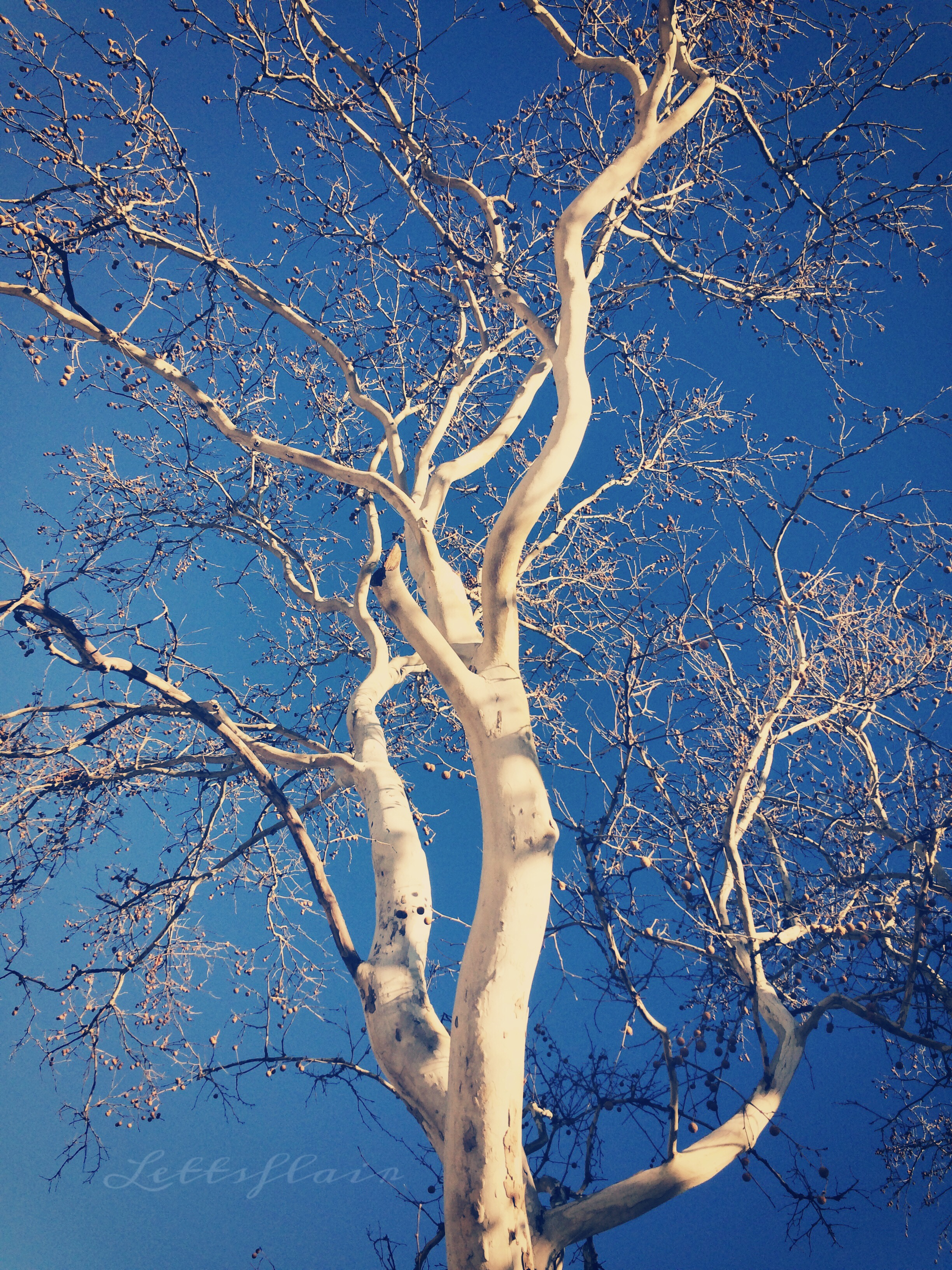 photo of a white tree for international day pf forests
