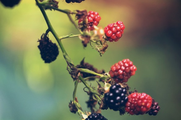 Fantastic Fruit: A #berries Photo Gallery