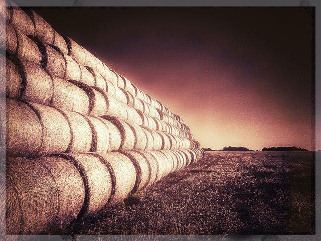 #farm