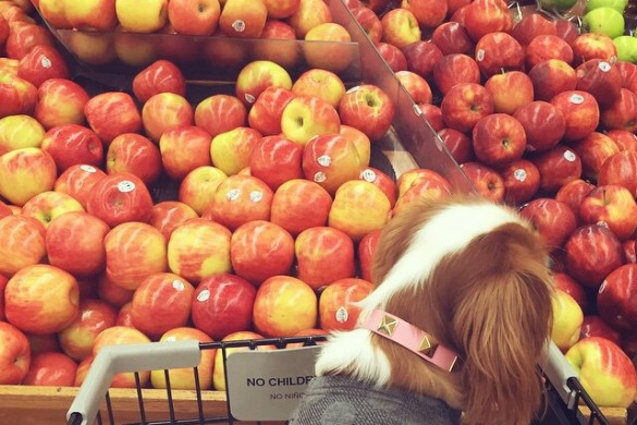 An Apple a Day: A Photo Gallery of #apples