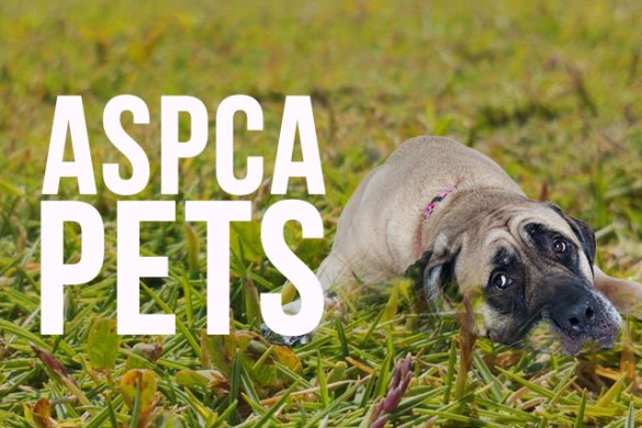 Support the ASPCA with the ASPCA Pets Package