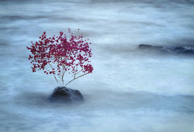 Lonely tree by @melissa_vincent