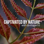 Captivated by nature text on the photo of a red plant