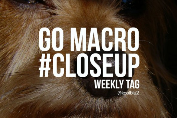 Go Macro with the Weekly Tag #closeup