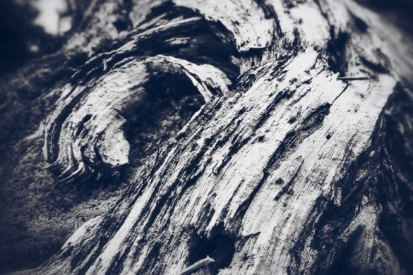 Beautiful Trees: A #bark Photo Gallery