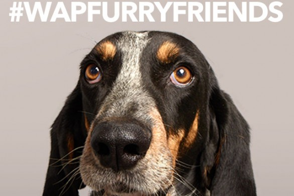 Show Your Love for Your Pets with #WAPFurryFriends