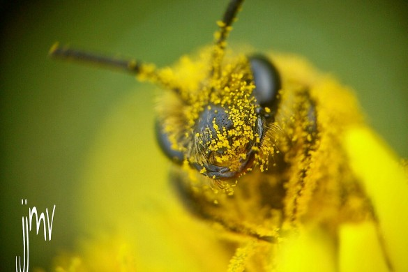 PicsArtists' Best #bee Photos: A Photo Gallery
