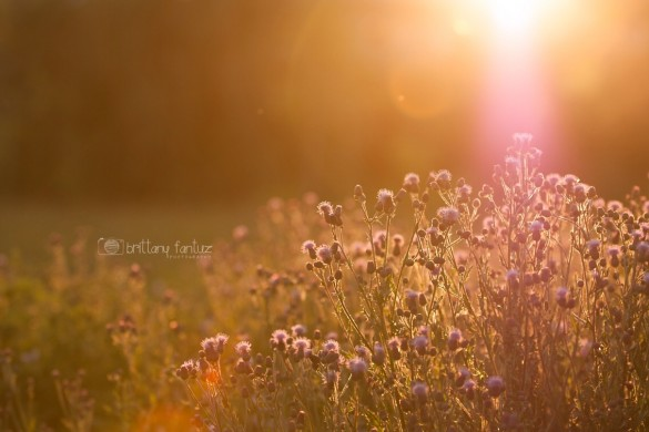 PicsArtists Get Creative with #bokeh: A Photo Gallery