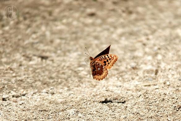 Beautiful Butterflies: A Photo Gallery
