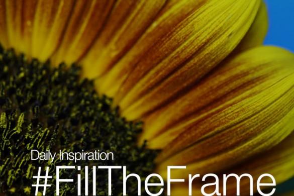 Friday Inspiration: #FillTheFrame