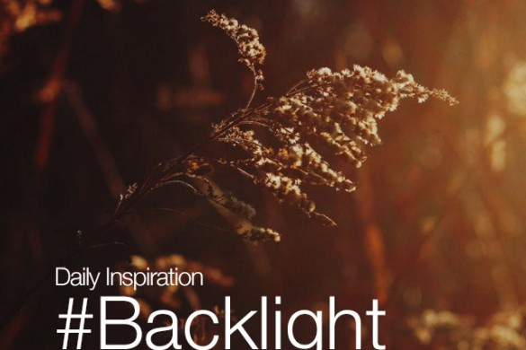 Tuesday Inspiration: #Backlight