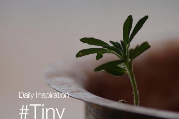 Tuesday Inspiration: #Tiny