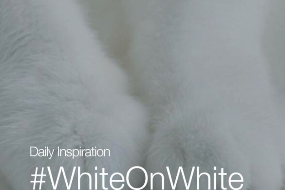 Wednesday Inspiration: #WhiteOnWhite