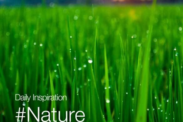 Sunday Inspiration: #Nature