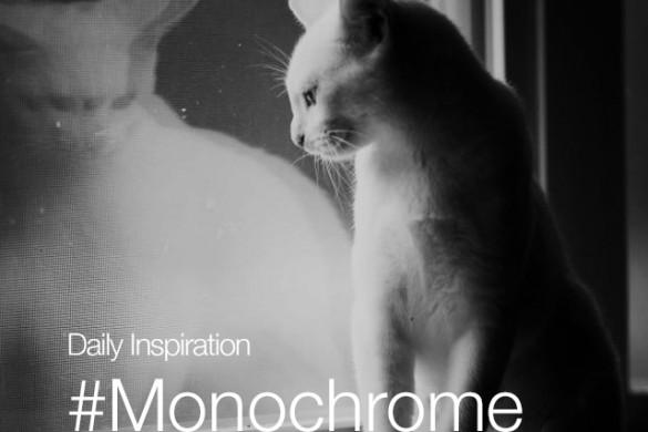 Wednesday Inspiration: #Monochrome