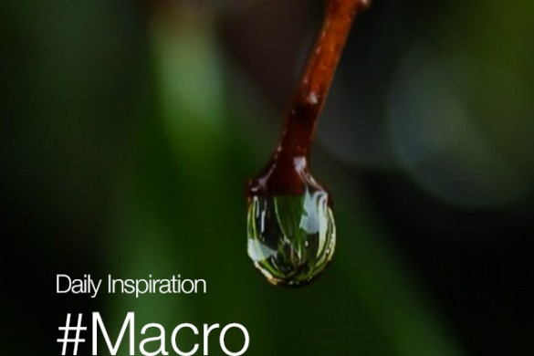 Monday Inspiration: #Macro