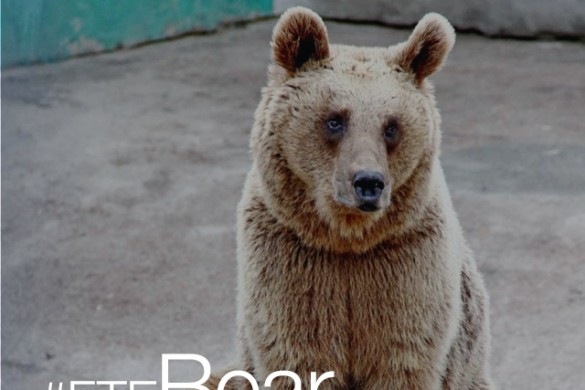 Explore Your Wild Side With the #FTEBear Contest