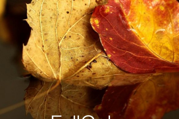 Weekly Photo Project: Fall Colors