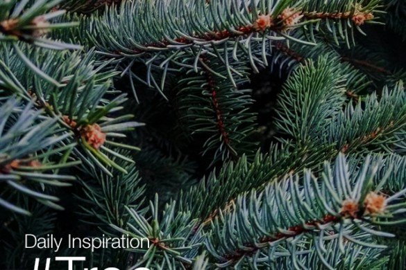 Tuesday Inspiration: #Tree