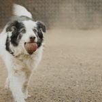 Posh Pets Photography by Karen Weiler