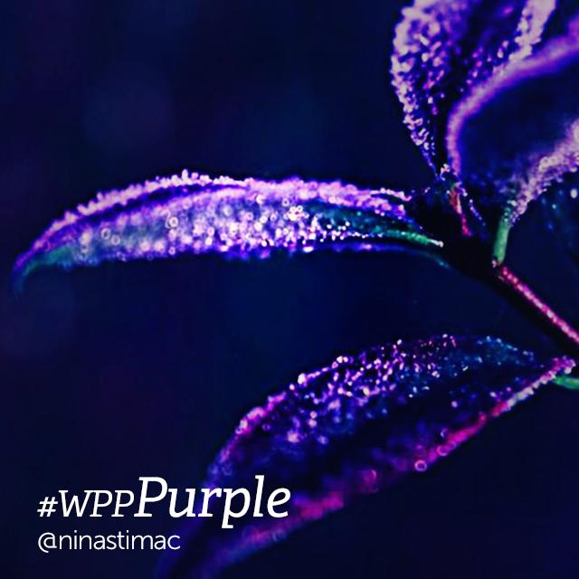 Beautiful purple herb edited with picsart