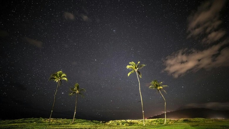 night sky and palm trees