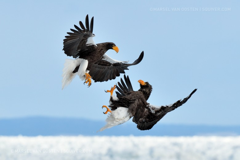 Wildlife Photography: Flying Birds