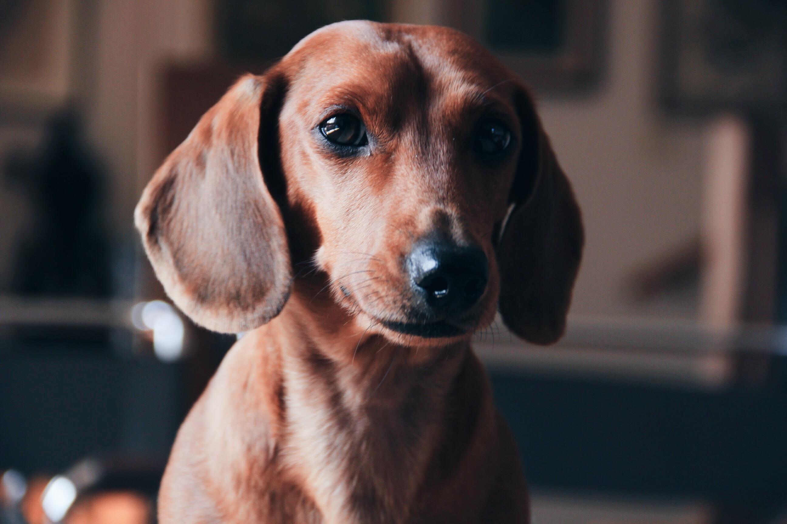 best dog photos