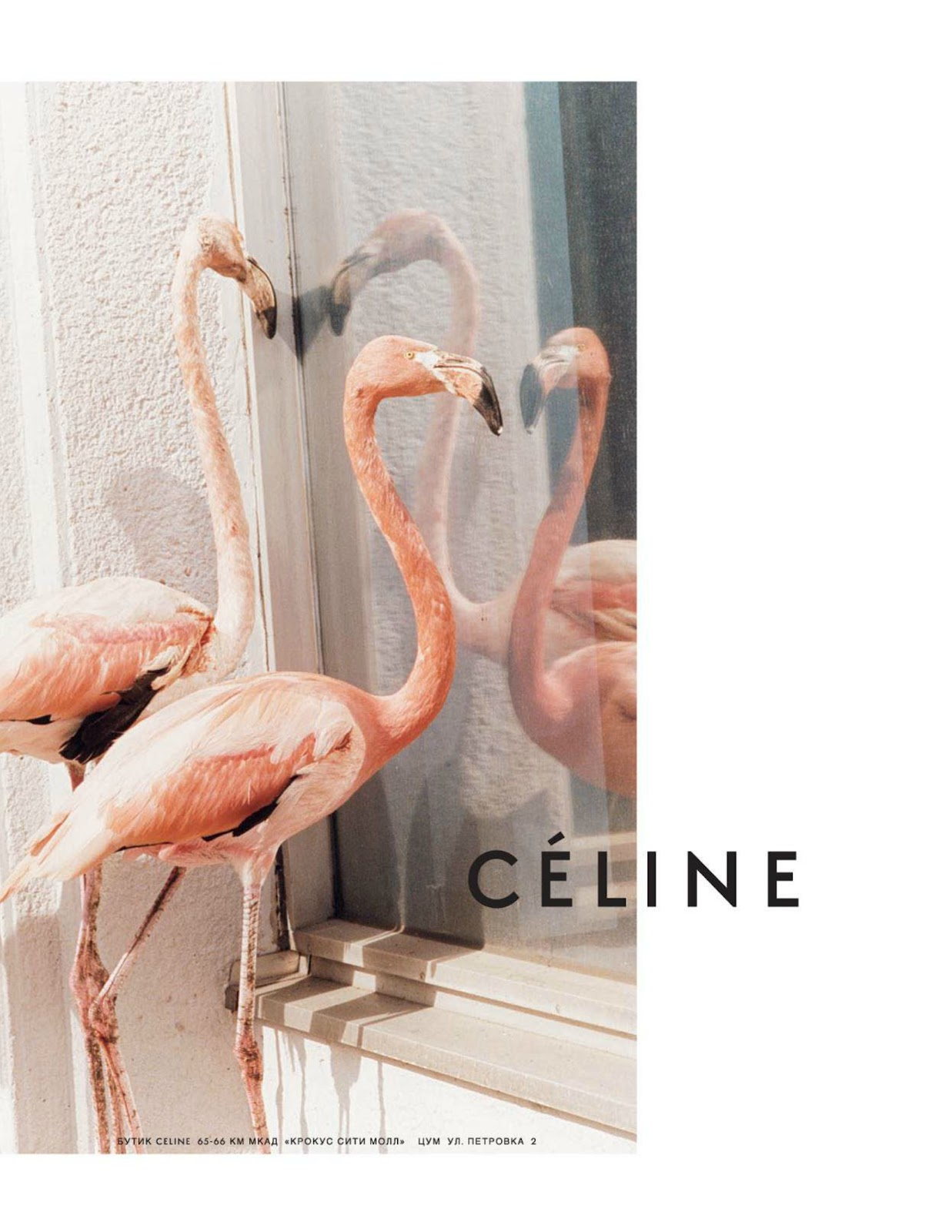 Céline fashion photography