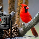 Learn How to Read a Histogram - PicsArt Blog
