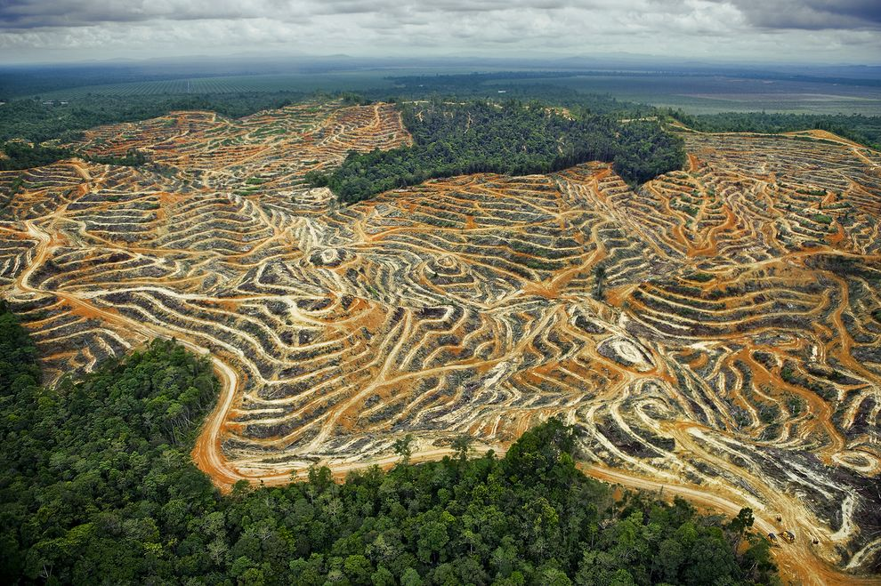 Borneo deforestation by Mattias Klum - Earth Day - PicsArt Blog