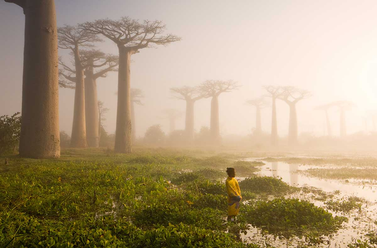 Baobab Trees in Madagascar by Marsel van Oosten - Earth Day - PicsArt Blog