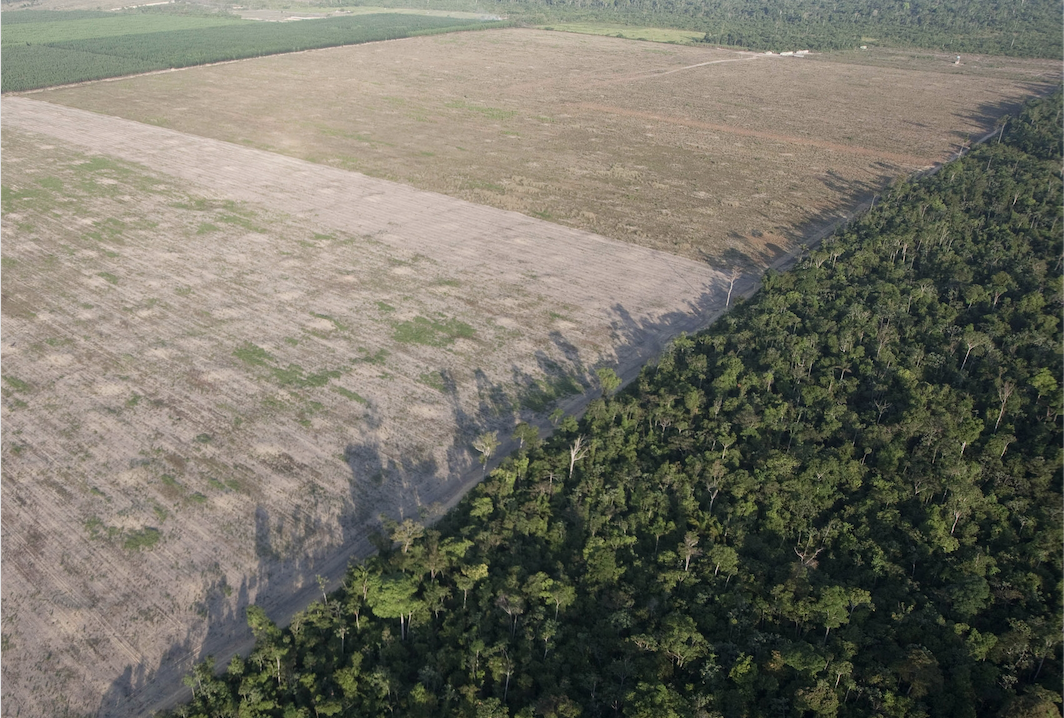 Amazon deforestation by AP / Andre Penner - Earth Day - PicsArt Blog