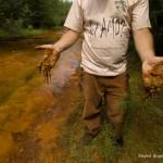 Let's Talk About Conservation Photography - PicsArt Blog