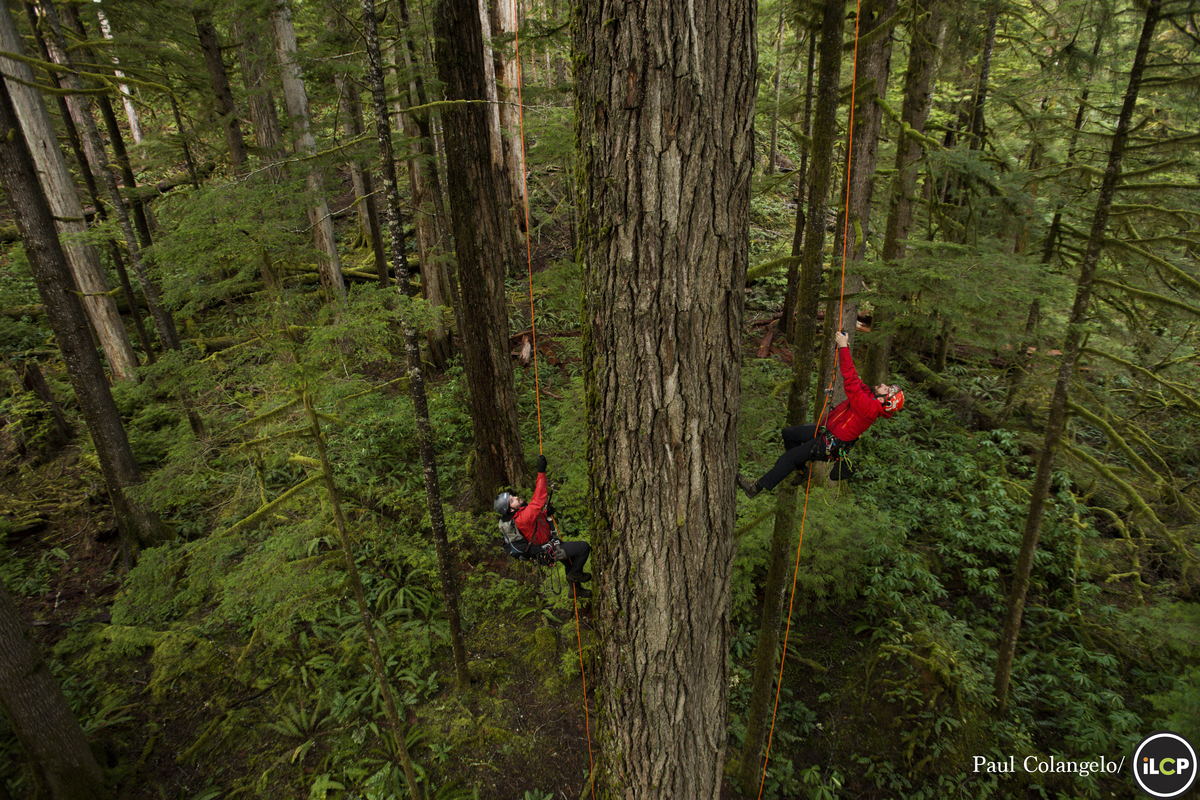 Tree climbing in southwestern Oregon - Conservation Photography - PicsArt Blog