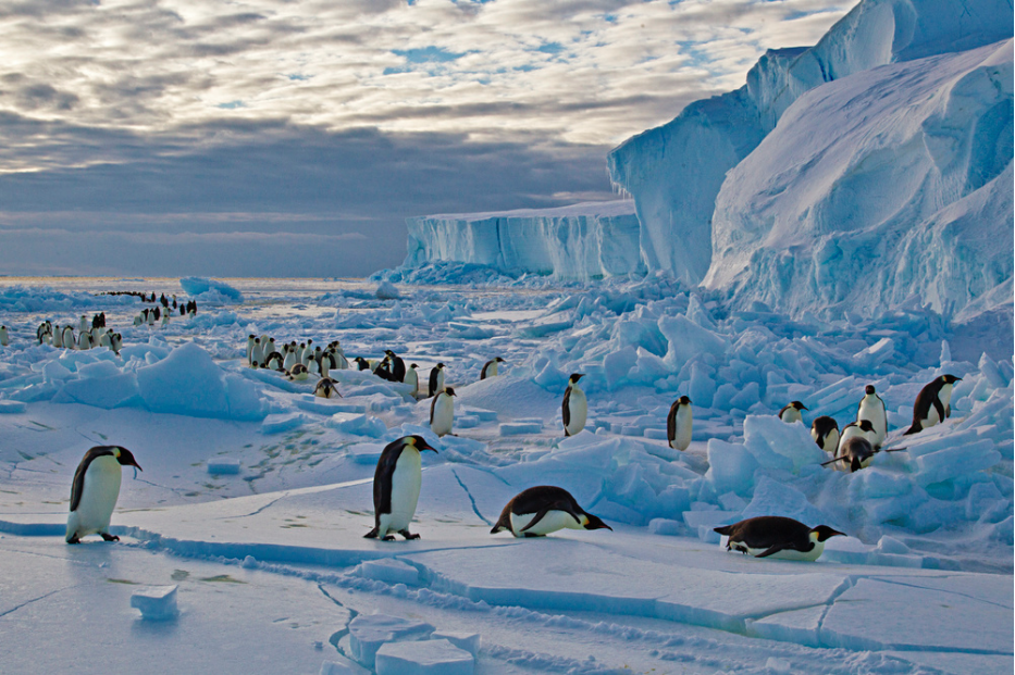 Penguins in Antarctica by Paul Nicklen - Earth Day - PicsArt Blog