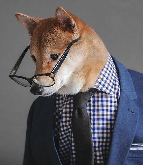 Businessman Dog