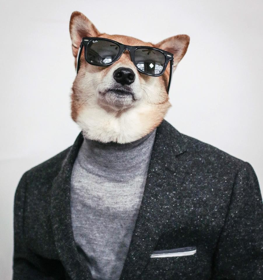 Cool Dog in Blazer and Sunglasses