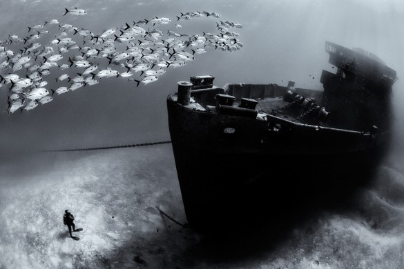 A school of horse-eye jacks (Caranx latus) swim over the bow of the USS Kittiwake wreck, while diver looks on. Seven Mile Beach, Grand Cayman, Cayman Islands, British West Indies. Caribbean Sea.