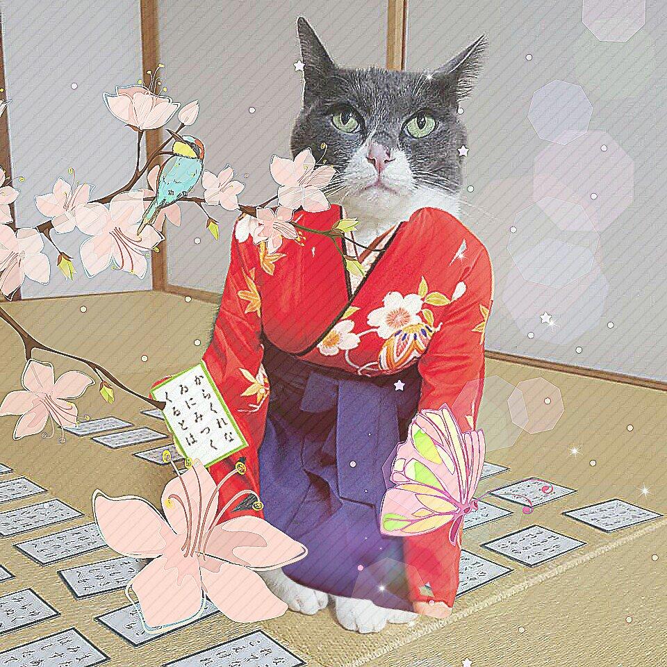 Cat Wearing a Kimono