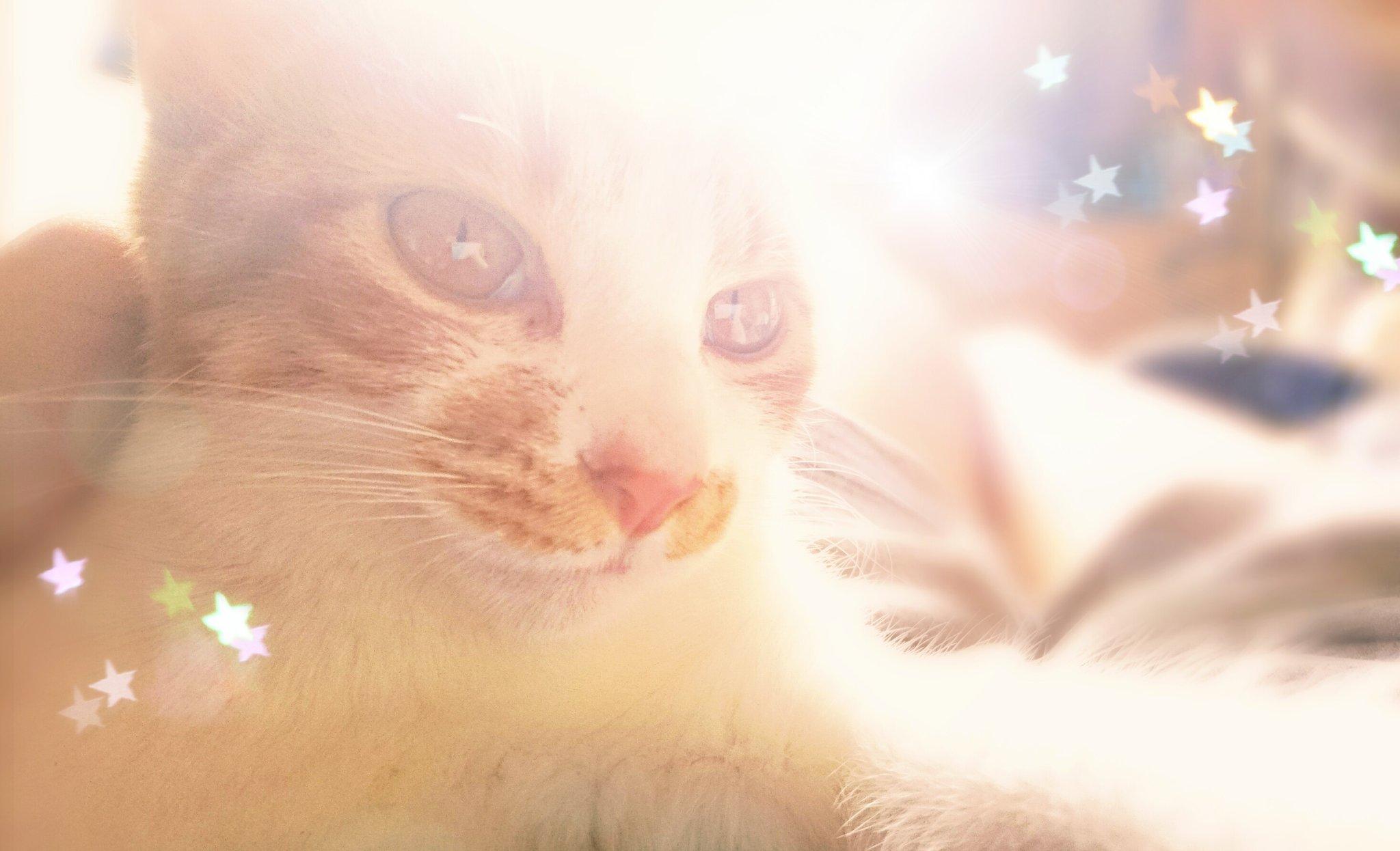 Catfie Cat Selfie