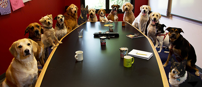 Dogs Boardroom Meeting