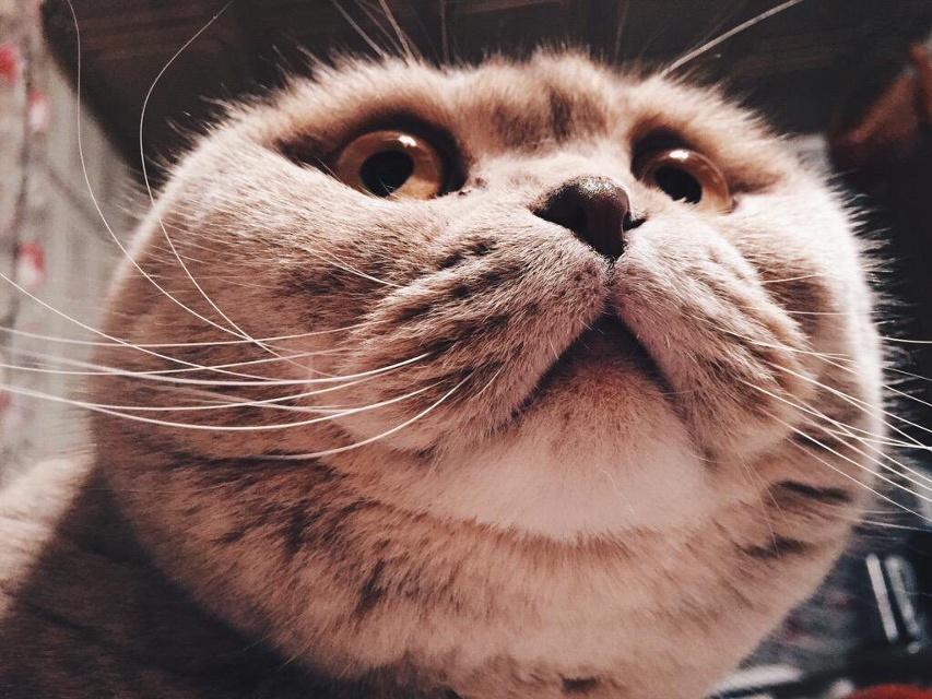 best cat photos on picsart