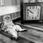 Black and white photo of a cat beside clock