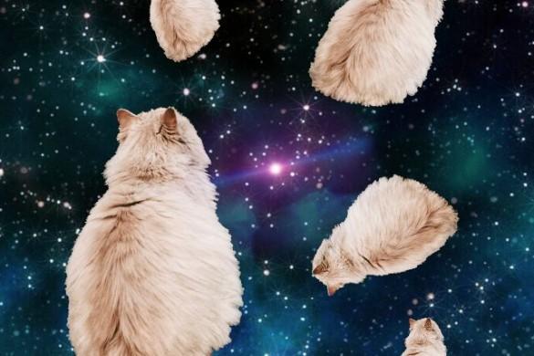 iphone wallpaper cat pictures