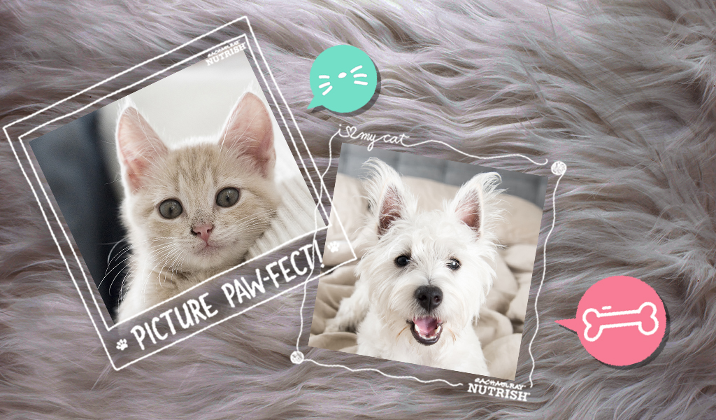 free frames for cat and dog pictures