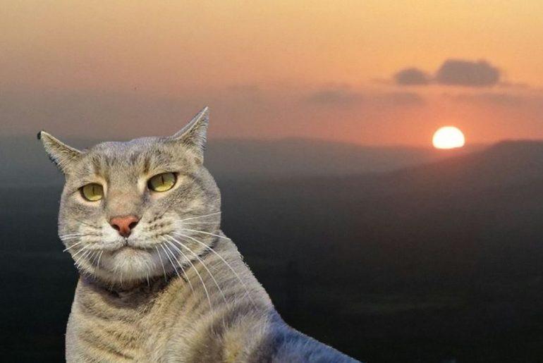 Cat Selfie Sticker on PicsArt